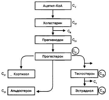 холестерин лпнп повышен а триглицериды в норме